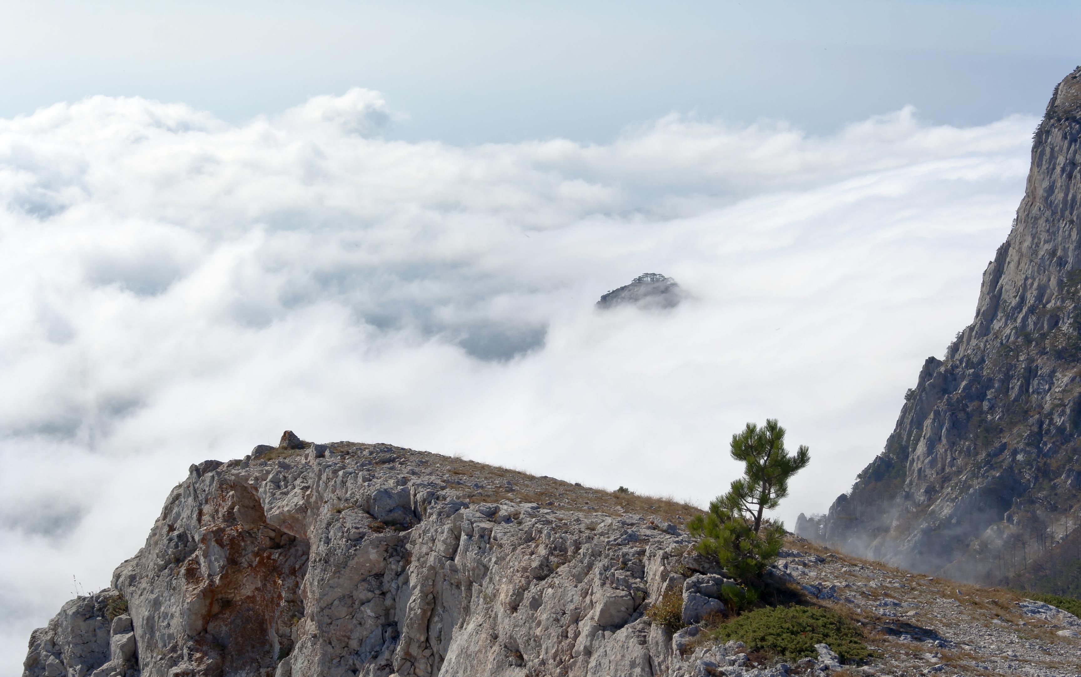 pine on a rock in the clouds. Crimea, Ukraine.